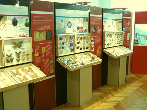Частный музей бабочек
