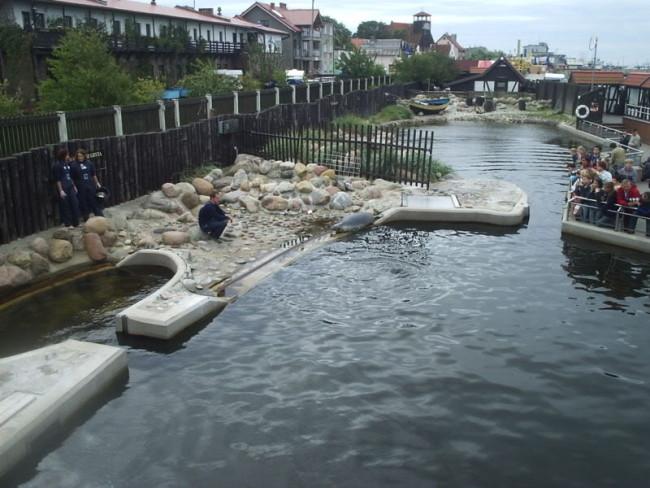Питомник балтийских тюленей